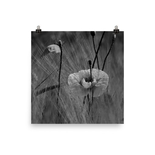 Wild Poppies photoart. Black color version. No. 3 out of 3.