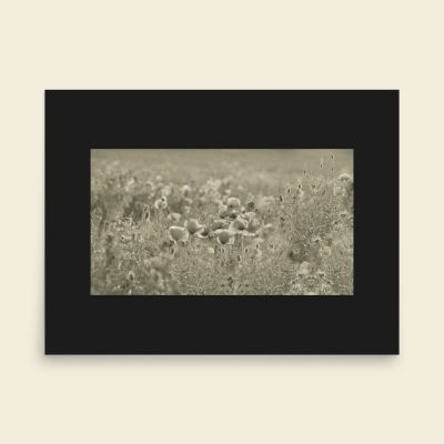"Silver cloud photo art on poster. Poppies flowering on a summer day seducing me into a romantic mood. Original Dimensions: 24""x18"" (61cm x 45,7cm)"